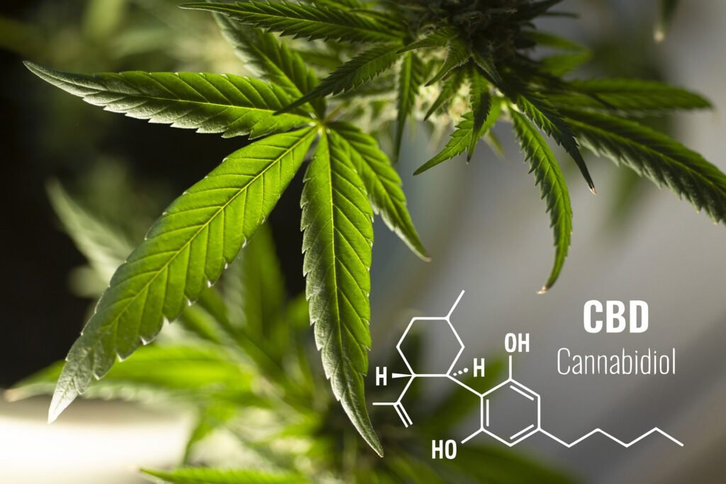 CBD full form Cannabidiol for Mental Health